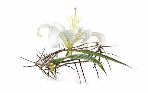 Homily notes: Easter Sunday, Year C, 21 April 2019